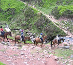 trails vary in length and complexity, and we can offer something to suit almost everyone's horse riding holiday needs