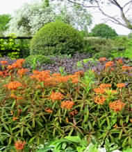 Veddw is a private garden open to the public, owned by Anne Wareham, garden writer, and Charles Hawes