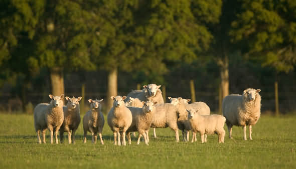 Farm Stays in the Brecon Beacons and surrounding regions.